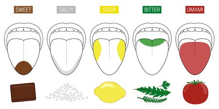 Zonas gustativas de la lengua. Ilustración con cinco secciones de sabor: dulce, salado, ácido, amargo y umami, representadas por chocolate, sal, limón, hierbas y tomate. Ilustración de vector
