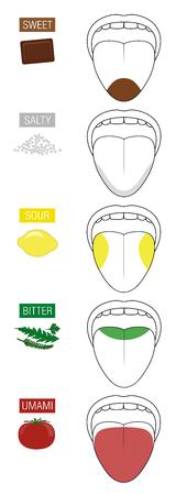 Dulce, salado, ácido, amargo y umami. Zonas gustativas de la lengua. Ilustración con cinco secciones de degustación representadas por chocolate, sal, limón, hierbas y tomate.