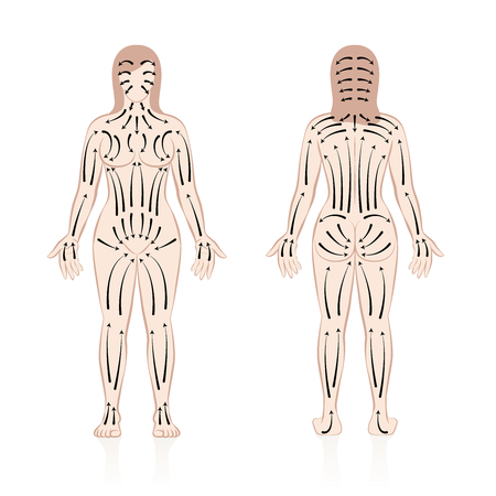 Body brushing. Female body with direction of brush strokes. Health and beauty treatment for skincare and massage, and to stimulate the blood circulation. Illustration of a nude male body, front and back view.
