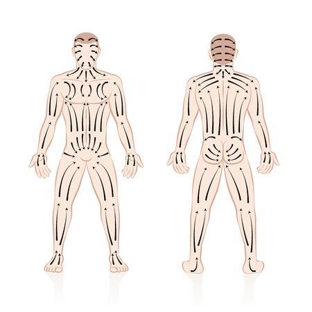 Dry skin brushing with direction of brush strokes. Health and beauty treatment for skincare and massage, and to stimulate the blood circulation. Illustration of a nude male body, front and back view. Иллюстрация