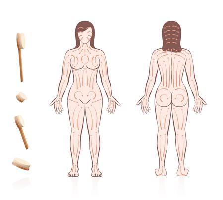 Lichaamshuid borstelen. Droge huid borstelen met richtingen van penseelstreken. Gezondheids- en schoonheidsbehandeling voor huidverzorging en massage, en om de bloedsomloop te stimuleren. Naakte vrouw, voor- en achteraanzicht.
