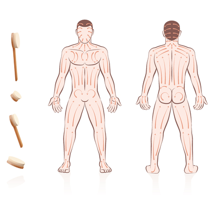 Body skin brushing. Dry skin brushing with directions of brush strokes. Health and beauty treatment for skincare and massage, and to stimulate the blood circulation. Nude man, front and back view.