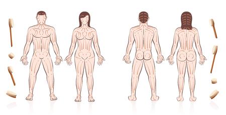 Instructions de brossage de la peau du corps pour les couples amoureux avec les directions des coups de pinceau. Massage partenaire pour la santé, la beauté, la détox, les soins de la peau et la relaxation. Homme et femme nus.