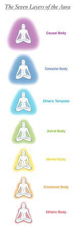 Gráfico de siete cuerpos de aura de una mujer de yoga meditando. Gráfico etiquetado: plantilla etérica, emocional, mental, astral, celestial y causal. Diferentes auras de colores del arco iris. Vector blanco.