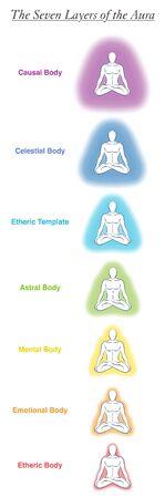 Gráfico de siete cuerpos de aura de un hombre de yoga meditando. Gráfico etiquetado: plantilla etérica, emocional, mental, astral, celestial y causal. Diferentes auras de colores del arco iris. Vector blanco.