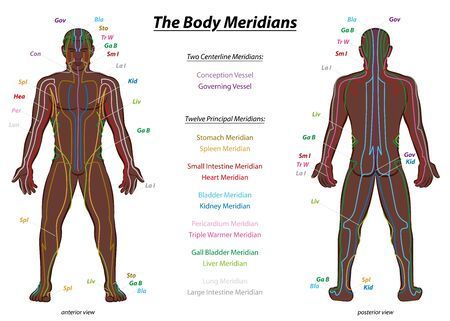 MERIDIAN SYSTEM CHART, black man, male body with labeled meridians - anterior and posterior view - Traditional Chinese Medicine. Ilustración de vector