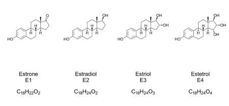 Major endogenous estrogens. Chemical structures of Estrone (E1), Estradiol (E2), Estriol (E3) and Estetrol (E4), hormones and steroids. Skeletal and structural formula. Illustration. Vector. Ilustración de vector