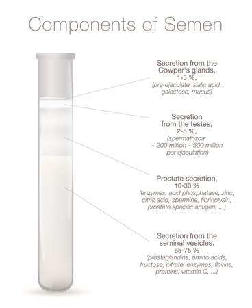 Components of semen infographic. Secretions from testes, prostate, seminal vesicles and cowpers glands in a test tube. Chart with elements of sperm, like enzymes, spermine, proteins, spermatozoa.