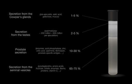 Sperm sample in a test tube. Components of semen. Medical chart with percentage of secretions from testes, prostate, seminal vesicles and cowpers glands. Vector on black.