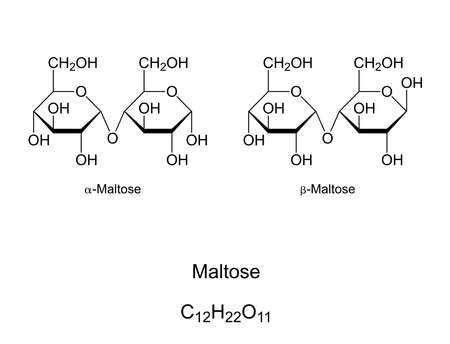 Maltose, malt sugar, chemical structure. Maltobiose, a disaccharide formed by 2 glucose units. Component of malt and substance obtained in the process of allowing grain to germinate in water. Vector. Ilustração