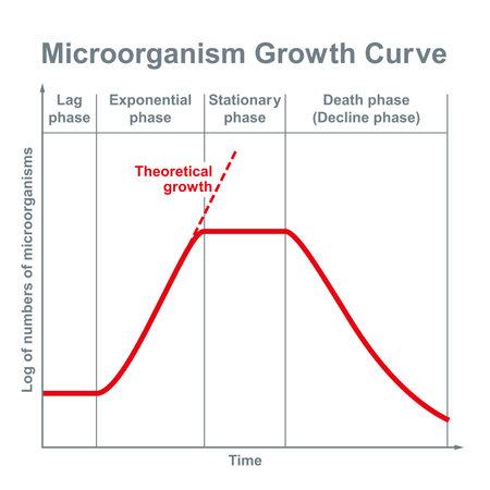 Microorganisms growth curve. Ideal kinetic curve of a static culture of microorganisms, such as bacteria, fungi, algae, protozoa and viruses, divided into four phases. Illustration over white. Vector. Ilustração