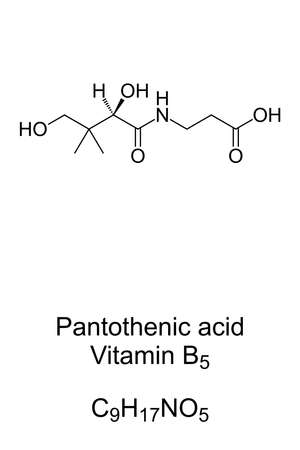 Pantothenic acid, vitamin B5, chemical formula and skeletal structure. An essential nutrient to synthesize coenzyme A, and to synthesize and metabolize proteins, carbohydrates, and fats. Vector. Ilustração Vetorial