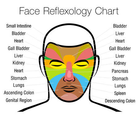 Face reflexology chart. Alternative acupressure and physiotherapy health treatment. Zone massage chart with colored areas and names of internal organs. Colorful face mapping.