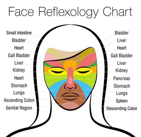 Face reflexology chart. Female face with colored areas and names of corresponding internal organs. Alternative acupressure and physiotherapy health treatment. Vector on white.