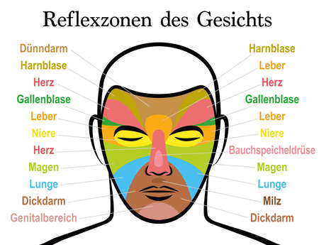 Face reflexology chart, german text. Alternative acupressure and physiotherapy health treatment. Zone massage chart with colored areas and names of internal organs. Colorful face mapping.