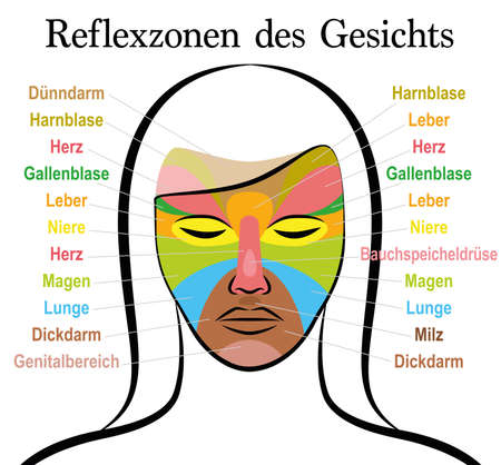 Face reflexology chart, german text, female face. Acupressure and physiotherapy health treatment. Zone massage chart with colored areas and names of internal organs. Colorful face mapping.