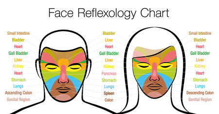 Face reflexology chart, woman and man. Acupressure and physiotherapy health treatment. Zone massage chart with colored areas and names of internal organs. Colorful face mapping. Ilustración de vector