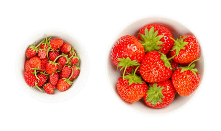 Wild and garden strawberries in white bowls. Fresh, ripe and bright red fruits of Alpine strawberries, Fragaria vesca, and the much larger garden strawberries, Fragaria ananassa. Close-up, food photo.