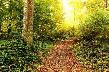autumn setting in a forrest with sun rays. Green trees and track Standard-Bild