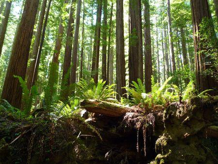 Humboldt Redwoods Stock fotó