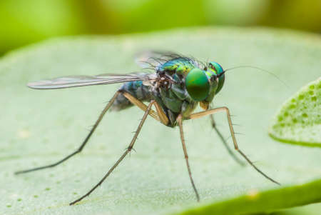 Super macro fly portrait photo