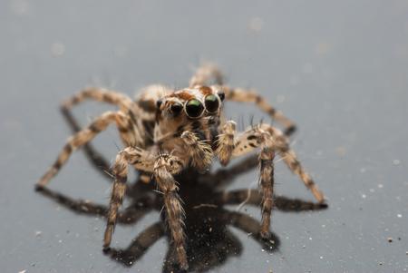 arachnoid: Macro ragno ritratto