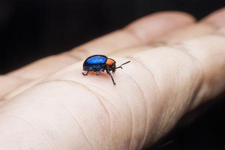 Macro  bug Colorful On hand . photo
