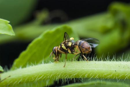 macro wasp of the garden Stock Photo
