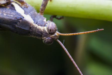 grasshopper in nature photo
