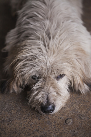 matted: Dirty dog on the street