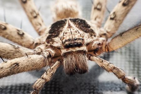 arachnidae: Closeup spider