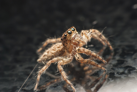jumping spider: jumping spider. Stock Photo