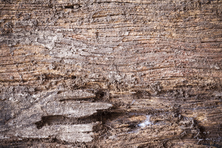 materia: old wood background. Stock Photo