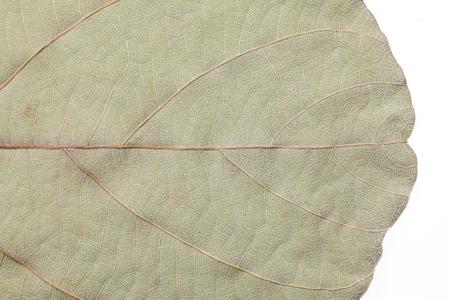 dried leaf: Dried leaf background.