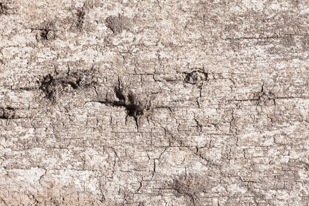 materia: Texture old wood background.