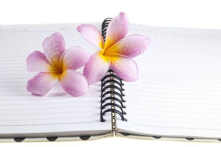 plumeria on a white background: Plumeria  on a white book background.