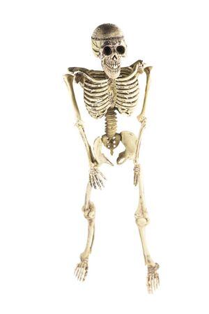 Modell Menschlichen Skeletts Auf Einem Weißen Hintergrund ...