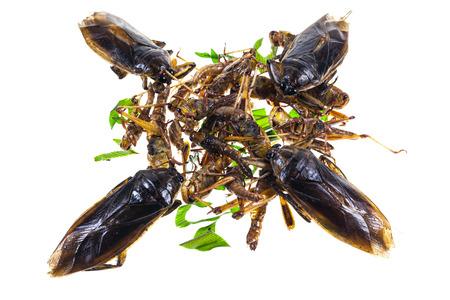 pimp: Fry grasshopper, water pimp thai snack food on white background. Stock Photo
