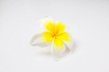 plumeria on a white background: Plumeria on white background. Stock Photo