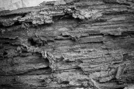 rotten: Old wood rotten.