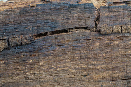 rotten: Background old wood rotten. Stock Photo