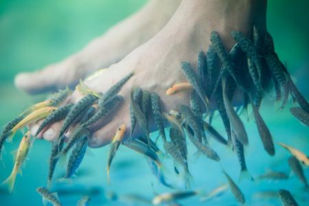 garra: Pedicure fish spa, Fish spa pedicure, Rufa Garra fish spa pedicure massage treatment, Closeup of feet and fish in water. Stock Photo