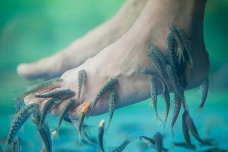 Pedicure fish spa, Fish spa pedicure, Rufa Garra fish spa pedicure massage treatment, Closeup of feet and fish in water. Stockfoto