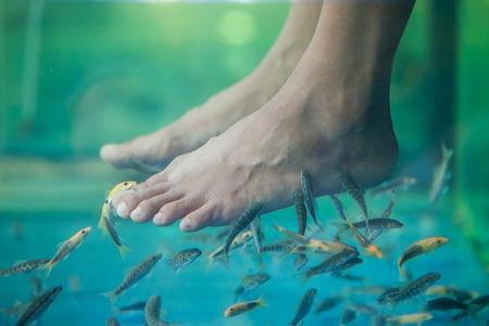 rufa: Pedicure fish spa, Fish spa pedicure, Rufa Garra fish spa pedicure massage treatment, Closeup of feet and fish in water. Stock Photo