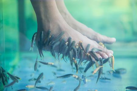 Pedicure fish spa, Fish spa pedicure, Rufa Garra fish spa pedicure massage treatment, Closeup of feet and fish in water. Stock Photo