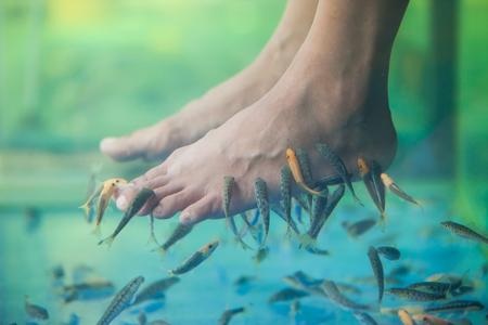 rufa garra: Pedicure fish spa, Fish spa pedicure, Rufa Garra fish spa pedicure massage treatment, Closeup of feet and fish in water. Stock Photo