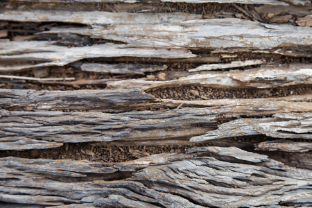 weathering: Old wood surface weathering