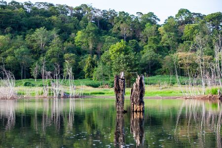 Tree stump and their reflections in the dam. Banco de Imagens
