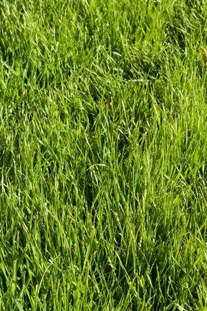 grassplot: close picture of grass-plot