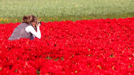 Girl photographer making pictures of flowers. Spring in the Netherlands photo
